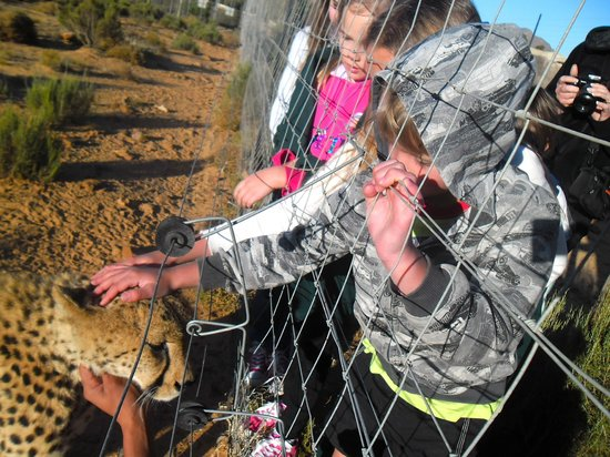 Touwsriver, Sr-Afrika: Petting a cheetah - the top moment