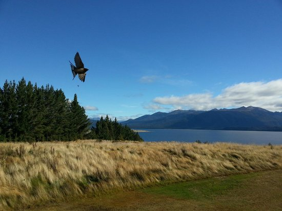 Fiordland Lodge: View from the Main Area