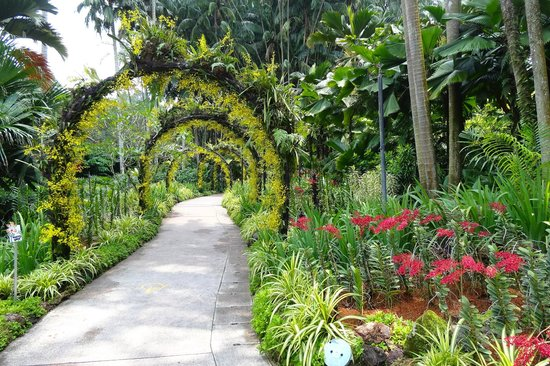 The national orchid garden singapore picture of for Au jardin restaurant singapore botanic gardens
