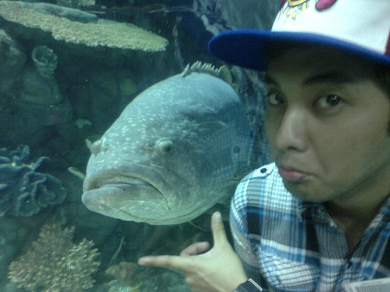 A large grumpy fish picture of manila ocean park manila for Grumpy s fishing report