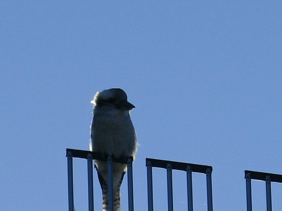 Riverview Tourist Park: Wally Kookaburra