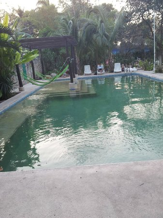 Nomadas Hostel: Pool, hammock, garden behind the pool