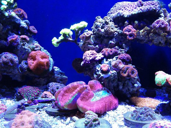 Coral Beds Picture Of Portland Aquarium Milwaukie