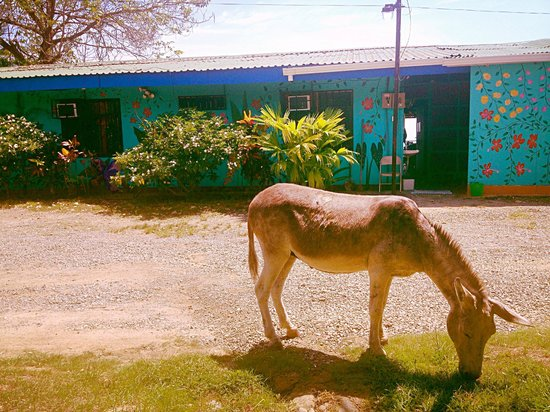 Hostel Vista Serena: Miss Donkey infront of Vista Serena