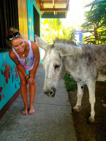 Hostel Vista Serena: A friendly donkey AKA: Costa Rican Lawn Mower