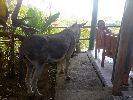 Hostel Vista Serena: Miss Donkey coming up to the terrace to say hi :)