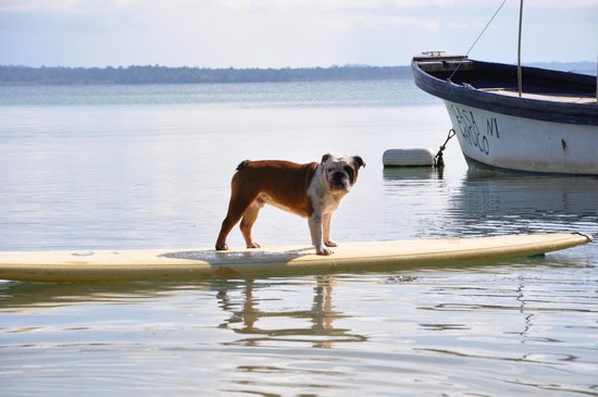 Casa Cayuco: Bulldogs & Paddleboards