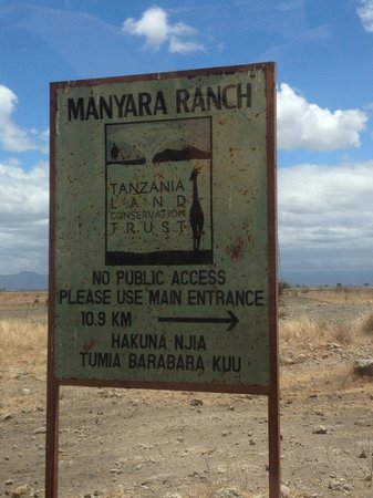 Manyara Ranch Conservancy: First arrival