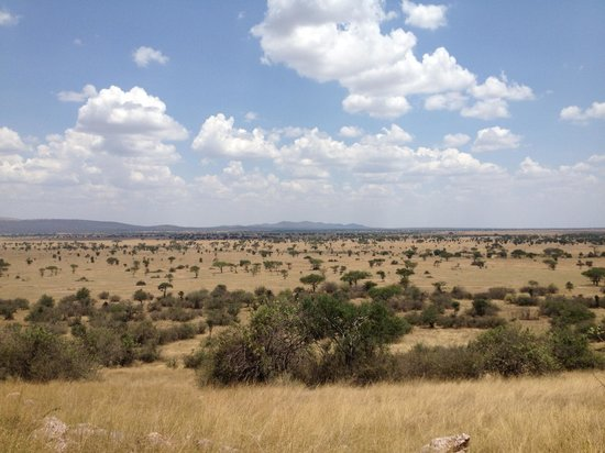 Manyara Ranch Conservancy: View