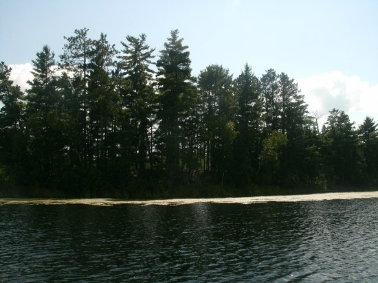 Lac du Flambeau, WI: Surrounded by woods