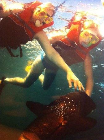 Distrito de Cairns, Australia: Snorkelling on the Great Barrier Reef