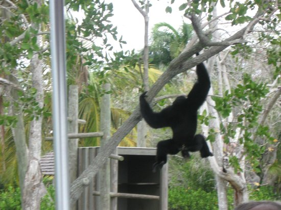 Boat Tour Via Monkey Islands Picture Of Naples Zoo At Caribbean Gardens Naples Tripadvisor