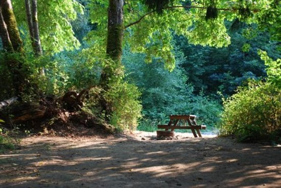 Cedar Grove RV Park & Campground: Beautiful Sites