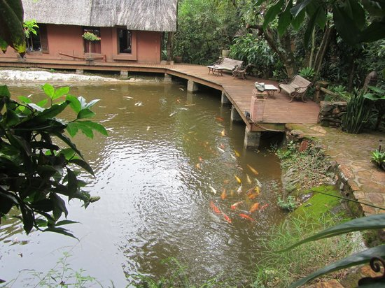 Sabie, Sydafrika: Koi pond outside dining area