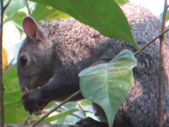 Mystic River Resort: Squirrel in the Jungle
