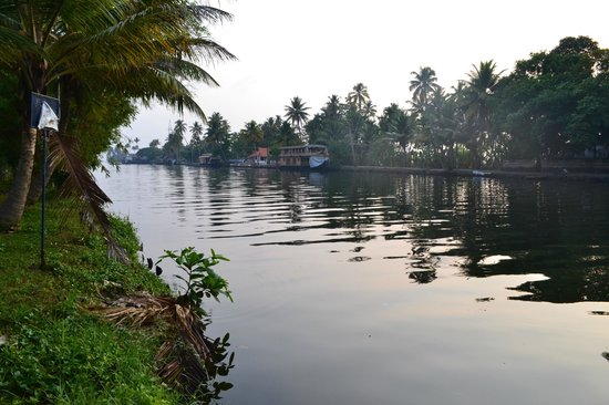 Palm Grove Lake Resort : Morning view of the backwaters