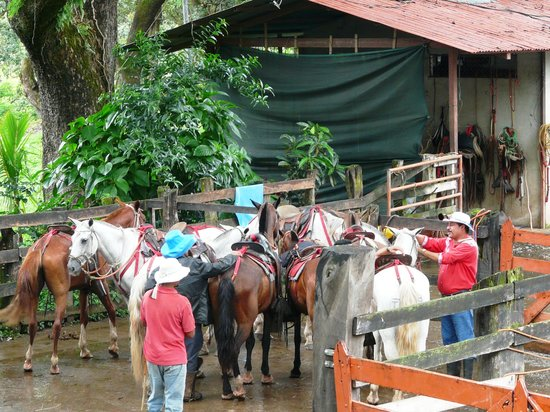 Hacienda Guachipelin: Preparando los caballos...