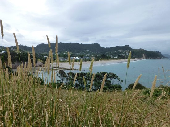 Hahei Oceanfront: View of Hahei Beach from the hill