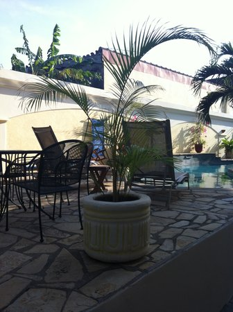 Hotel Xalteva: Baby palms
