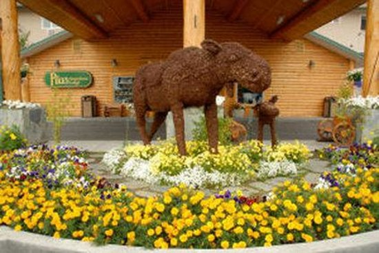 Pike&#39;s Waterfront Lodge: LMoose