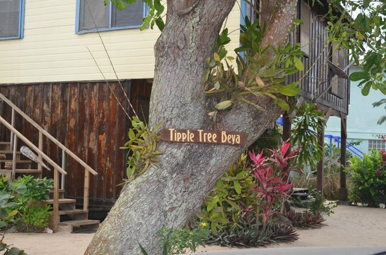 Tipple Tree Beya: Tipple Tree sign