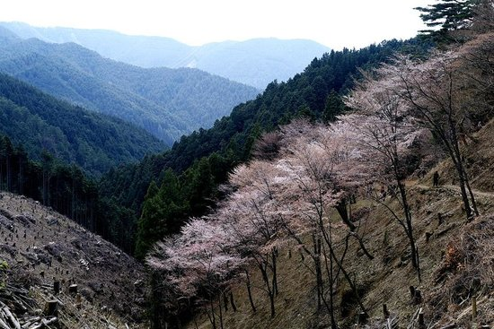 Nara Prefecture, Japón: Okusenbon - not worth the hike