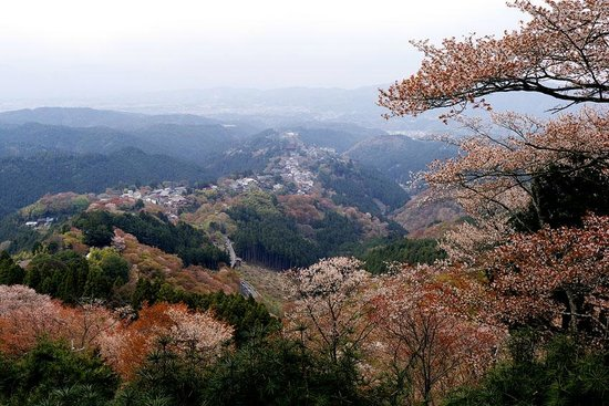 Nara Prefecture, Japón: view from hanayagura -- most trees on lower altitude have turned red-brown after shedding petals