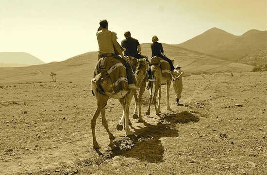 4X4 Camel - Private Day Tours