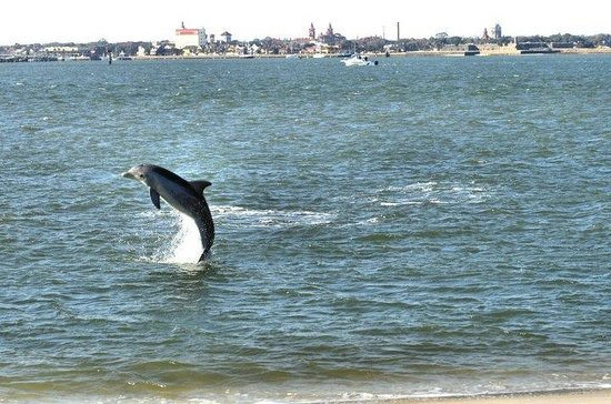 Dolphin Water Tours St Augustine Reviews
