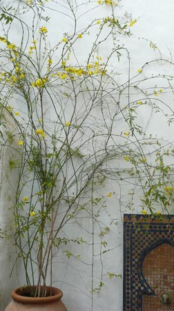 Cartajima, Spanien: The yellow jasmine in the Moorish courtyard