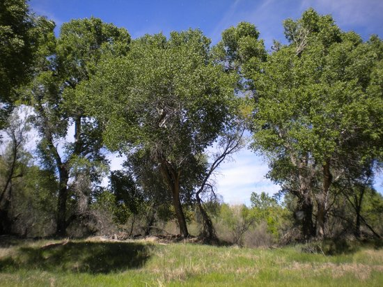 Cottonwood, AZ: lush and verdant