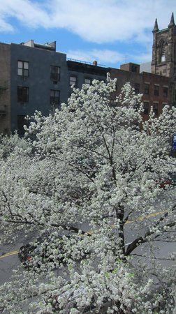 Chelsea Pines Inn: Blossoms Outsided Window