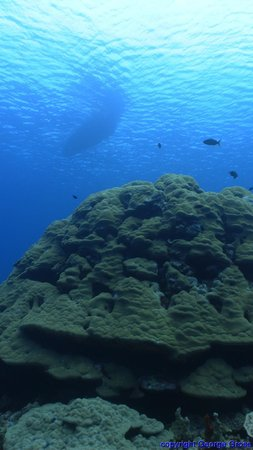 Kosrae, Federated States of Micronesia: Diving