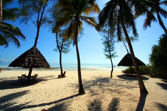 "Pongwe Beach Hotel : Beach with chairs and ""umbrellas"""