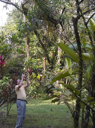 Pachira Lodge: I am taking a picture of a howler monkey on the way to breakfast.