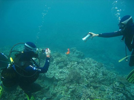 Poindimie New Caledonia  city photo : Tieti Diving Reviews Poindimie, Grand Terre Attractions ...