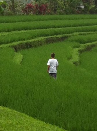 Bali Eco Stay Rice Water Bungalows: sitting in Harvest watching my son take a walk