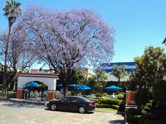 Flamingo Inn: Las jacarandas son clsicas en los meses de marzo