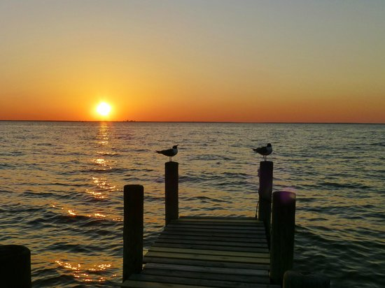 Point Clear Cottages: Sea Gulls watching the sunset
