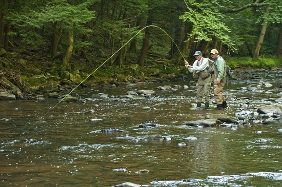 Champion, PA: Fly fishing excursions