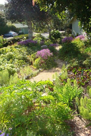 Carmel River Inn: Pathways between some of the bungalows.