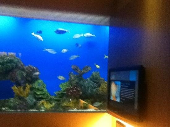 Hotel H2O: fishy fishy
