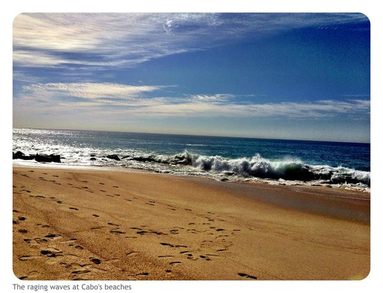 Hilton Los Cabos Beach & Golf Resort: Beach view