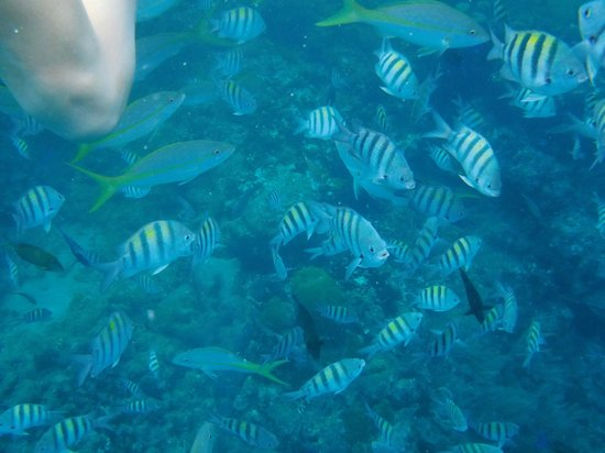 Casa Marina Reef: Underwater