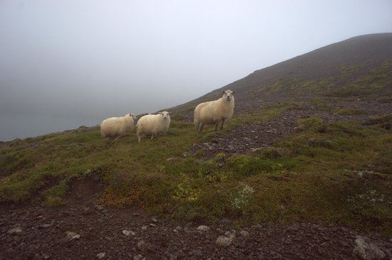 Solstice Private Tours: Back country tour with cool sheep