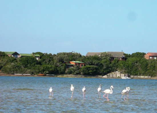 i-Lollo Lodge: Flamingos in the estuary