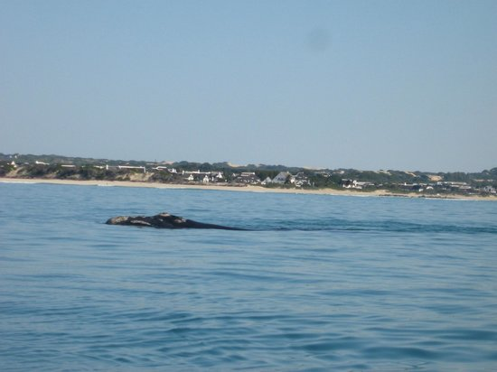 i-Lollo Lodge: Whale watching in St Francis Bay