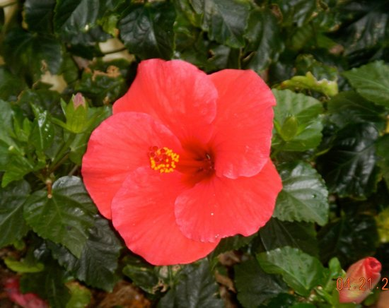 Alhambra Beach Resort: Hibiscus