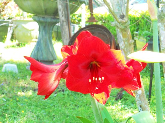 Bryant House Bed &amp; Breakfast: Flower in the front yard