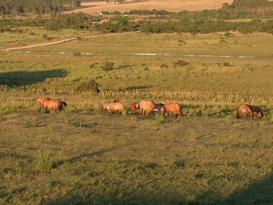 Estancia VIK Jose Ignacio: Some of Estancia Vik&#39;s beautiful horses seen from our room